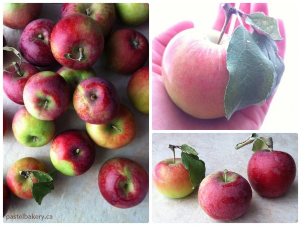 Fresh Organic Ontario Apples
