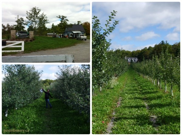 Organics Farm Organic Apple Farm Ontario