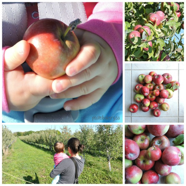 apple Collage_REV